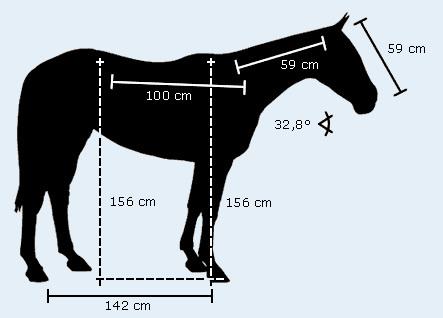 cheval de polo