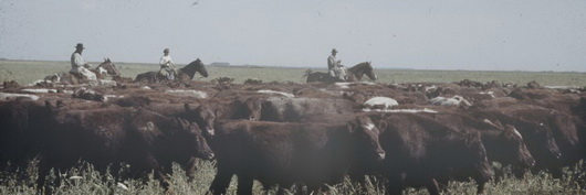 histoire de la viande argentine