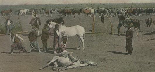 argentine gaucho