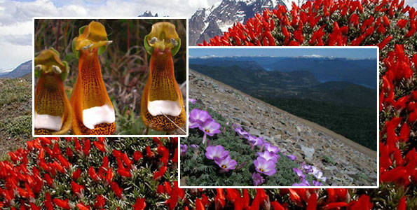 flore de patagonie
