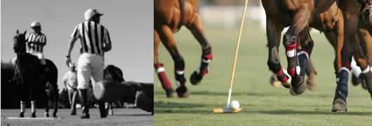 regles du polo