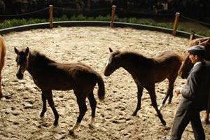 clone cheval de polo cambiaso