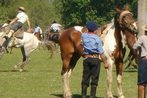 chevaux argentine