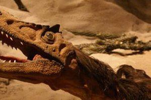 Leonerasaurus Taquetransis