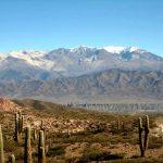 cachi cactus