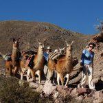 rando avec les lamas
