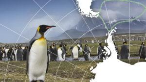 antarctique manchot royal