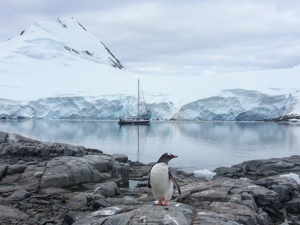 antarctique en voilier