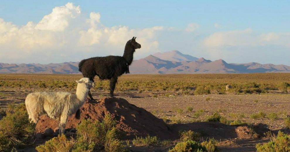 argentine panoramas