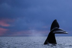 Baleines à Rincon Chico