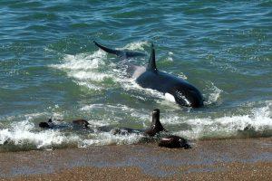 Orques à Rincon Chico