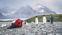 antarctique malouines plancius