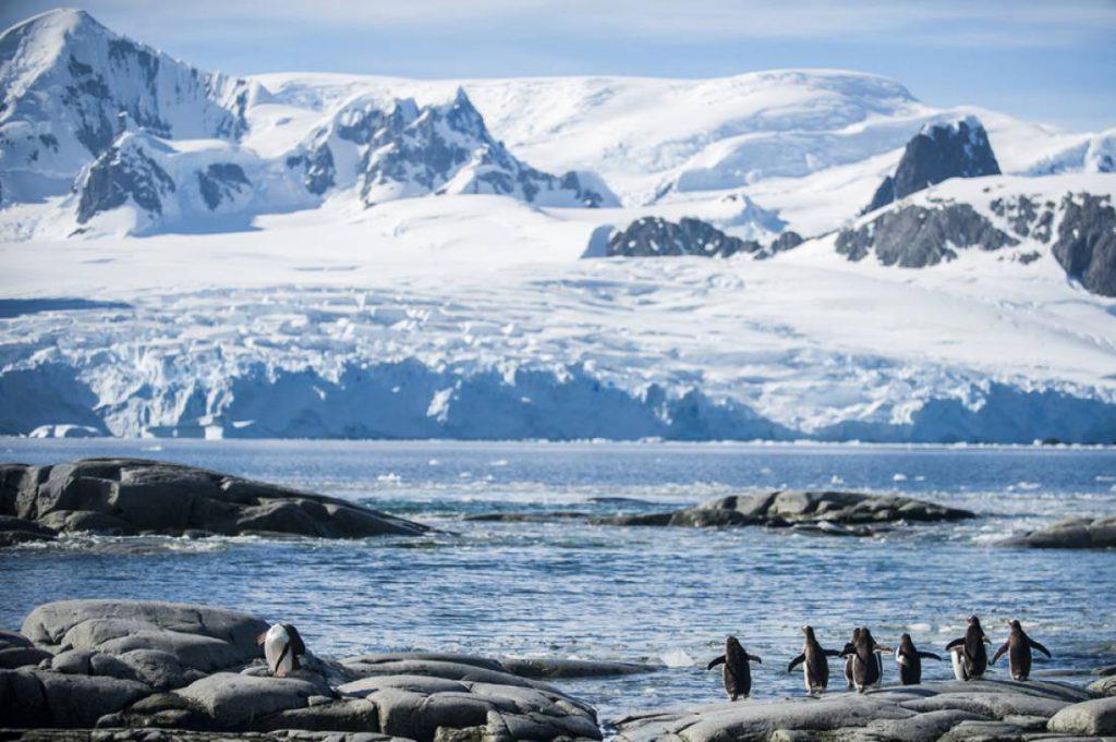 antarctique 8