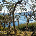 wulaia australis