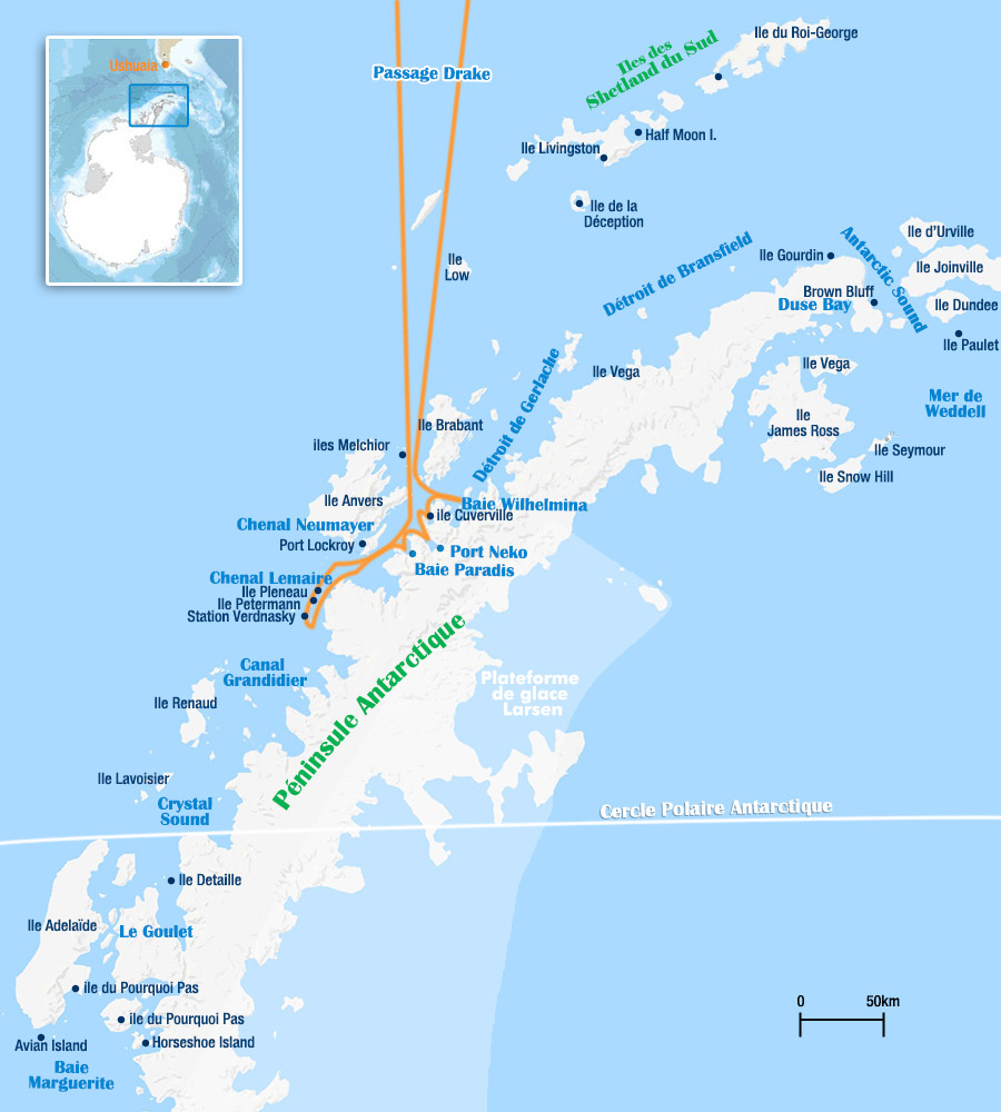 antarctique observation des baleines
