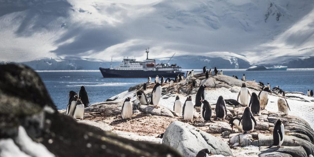 promo antarctique