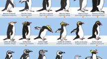 manchots de l'Antarctique