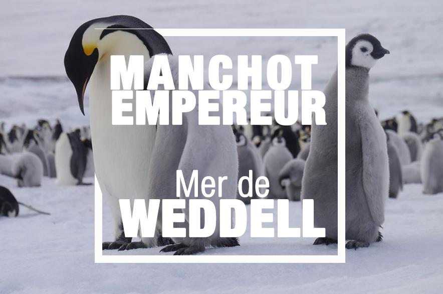 croisiere empereur weddell