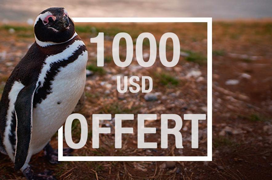 1000 usd offert